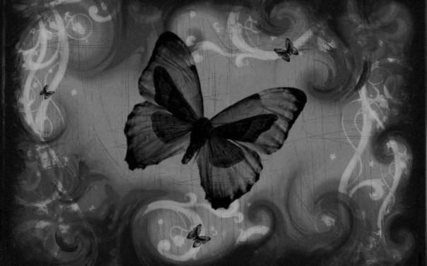 Black-butterfly